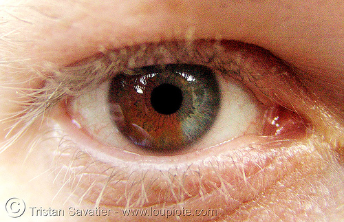 eye with heterochromia - iris closeup, bicolor, brown and grey, close up, eye color, eyelashes, ilya, iris, man, sectoral heterochromia, two colors