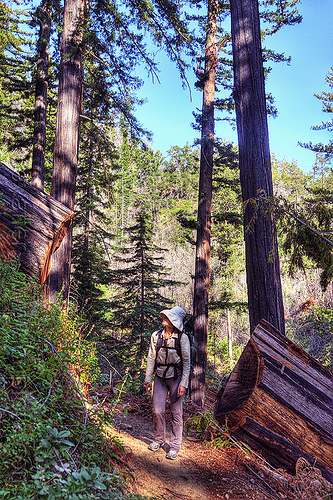 fallen redwood tree on trail, backpack, backpacking, big sur, fallen tree, forest, pine ridge trail, redwood tree, sequoia sempervirens, sharon, tree trunk, trekking, vantana wilderness, woman