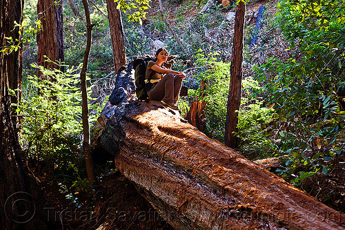 fallen redwood tree (vantana wilderness), backpack, backpacking, big sur, fallen tree, forest, hiking, pine ridge trail, redwood tree, resting, sequoia sempervirens, sitting, tree bridge, tree trunk, trekking, vantana wilderness, woman