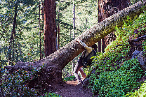 fallen tree on trail, backpack, backpacking, big sur, fallen tree, forest, pine ridge trail, sharon, tree trunk, trekking, vantana wilderness, woman