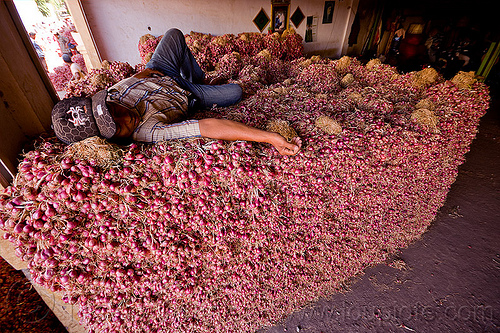 farm worker sleeping on shallots, allium cepa, foodstuff, heap, indonesia, lying down, man, produce market, shallots, sleeping, vegetable, veggie, worker