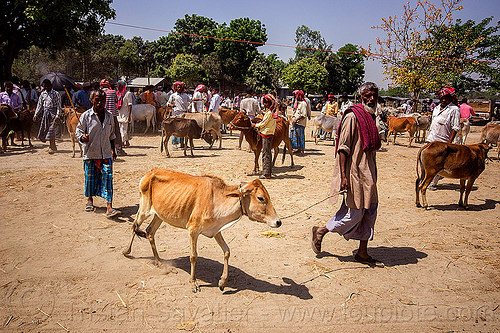 farmer with skinny cow at cattle market (india), cattle market, cows, crowd, leash, people, rope, skinny, walking, west bengal