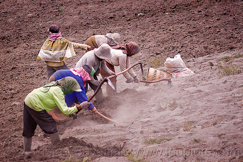 farmers hand ploughing a field - cemoro lawang, near bromo volcano (java), agriculture, dust, dusty, farmers, farming, farmland, field, hand plough, hand ploughing, hand plow, hand plowing, hats, indonesia, labour, labourers, ploying, women, working