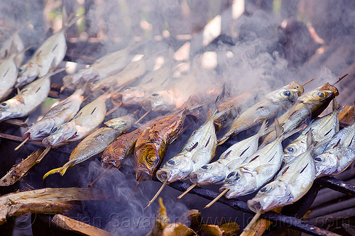 fish being smoked - tamansarari village near probolingo (java), fishes, food, grill, indonesia, skewers, smoke, smoked fish, smoking, tamansari