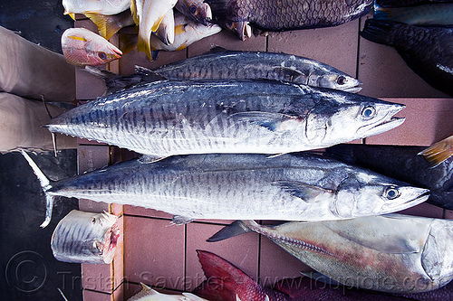 fish market, fish market, fishes, food, mackerel, seafood