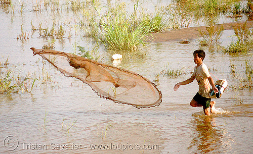 fisherman throwing net - mekong river, fishing, fishing net, man, people, vientiane, wading, water