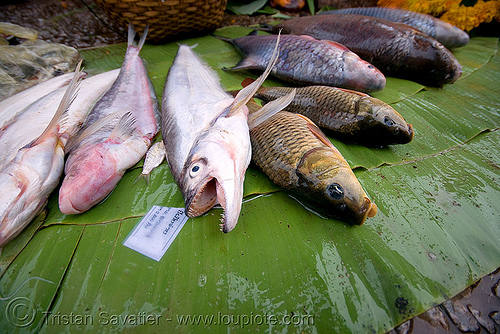 fishes on the market - luang prabang (laos), luang prabang