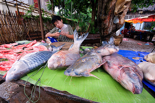 fishes on the market - luang prabang (laos), fishes, laos, luang prabang