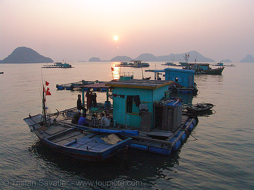 floating houses - vietnam, boat, cat ba island, cát bà, floating homes, floating houses, floating village, halong bay, sea