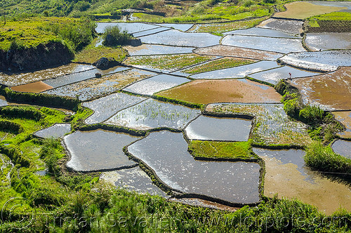 flooded rice fields near sagada (philippines), agriculture, flooded, philippines, rice fields, rice paddy fields, sagada, terrace farming, terrace fields, valley, water