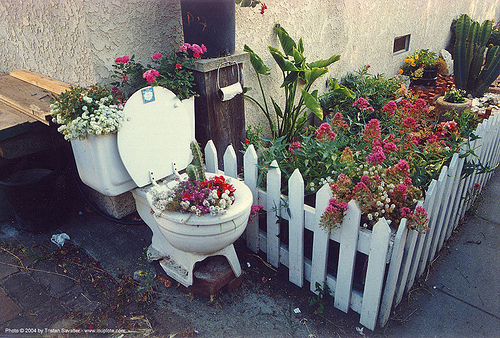 flower pot - toilet - venice beach - garden, city garden, flower pot, flowers, toilet seat, venice beach