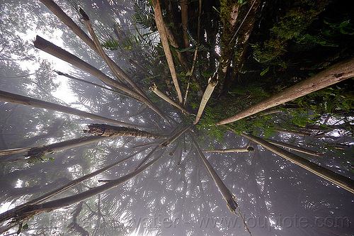 foggy rainforest, bali, fog, foggy, forest, hanging, pura lempuyang, rainforest, temple, tree