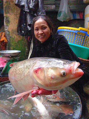 fresh fish - fish market - vietnam, asian woman, cho hang da market, food, hanoi, merchant, people, phồ hàng da, seafood, vendor