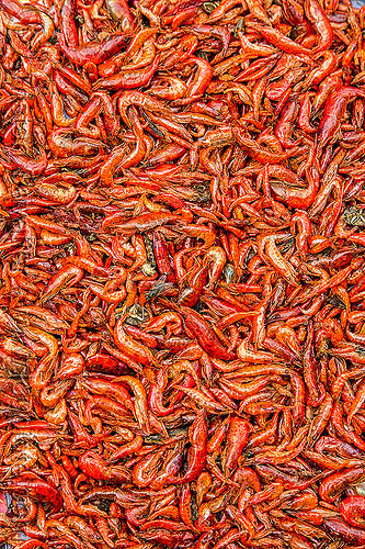 freshwater prawns (india), freshwater shrimps, gairkata, market, river prawns, river shrimps, street market, west bengal