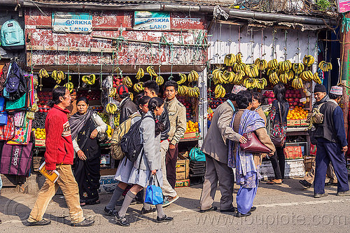 fruit store with hands of banana hanging - darjeeling (india), bananas, darjeeling, fruits, gorkhaland, india, shop, store, street seller, walking