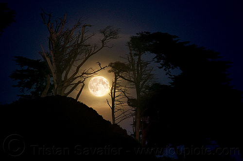 full moon behind trees, backlight, full moon, hazy, hill, moonrise, night, trees
