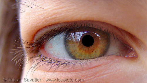 gaëlle hazel eye, close up, eye color, gaëlle, hazel, iris, macro, pupil, right eye, woman