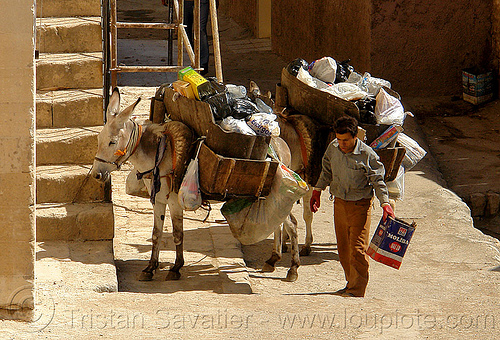 garbage pickup donkeys, asinus, donkeys, equus, garbage pickup, man, mardin, rubbish, trash pickup, working animals