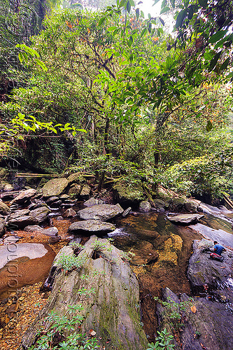 garden of eden - mulu (borneo), garden of eden, gunung mulu national park, jungle, rain forest, river, rocks, water