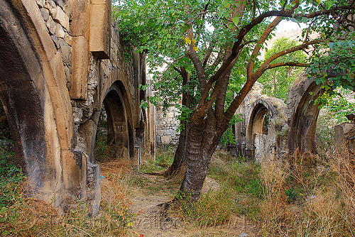 georgian church ruin (turkey), byzantine architecture, georgian church ruins, orthodox christian, oshki monastery, trees, vaults, öşk, öşkvank