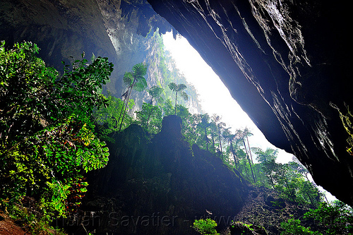 giant ferns at the mouth of deer cave - mulu (borneo), backlight, cave mouth, caving, deer cave, ferns, gunung mulu national park, jungle, natural cave, plants, rain forest, spelunking, trees