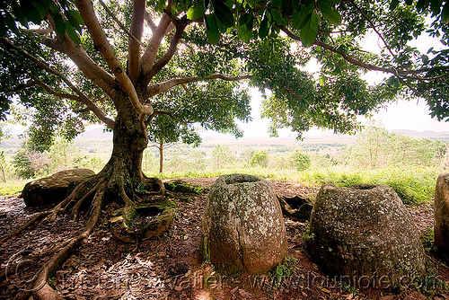 giant stone jars - plain of jars - site 2 - phonsavan (laos), archaeology, giant, phonsavan, plain of jars, stone jars, tree