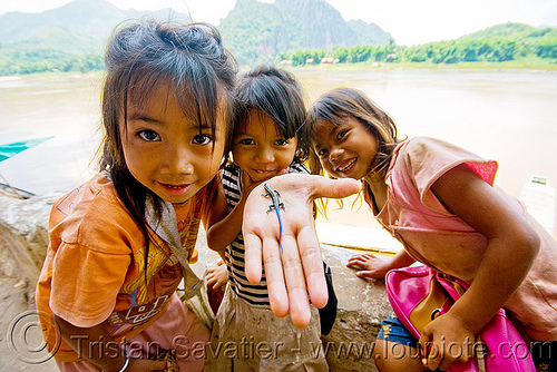 "girls playing with small blue-tail lizard - ""pak ou"" caves near luang prabang (laos), blue-tailed, children, hand, kids, little girl, mekong, pak ou caves, pak ou caves temples, people, reptile, river"