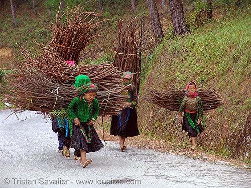 green hmong tribe girls carrying wood bundles - vietnam