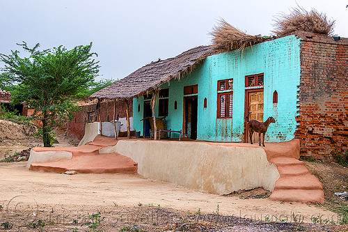 green house with goat (india), goats, green house, india, khoaja phool, village, खोअजा फूल