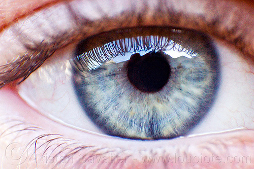 grey eye closeup, clemence, close-up, clémence, gray eye, grey eye, iris, pupil, reverse lens macro, right eye, texture, woman
