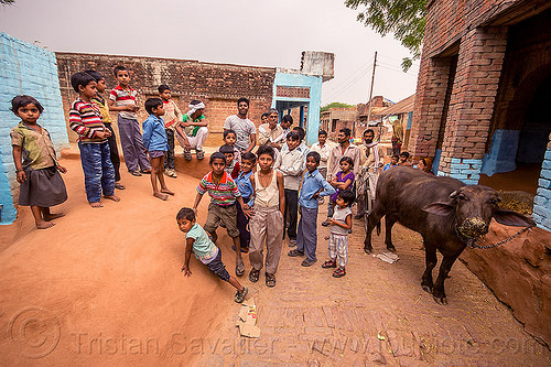 group of indian boys (and a water buffalo) on village street, adobe floor, children, cow, crowd, earthen floor, india, khoaja phool, kids, village, water buffalo, खोअजा फूल