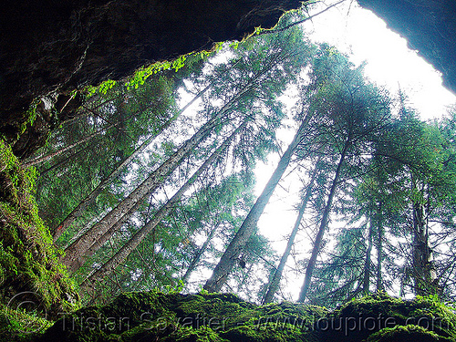 haramiska-pechtera-cave - trees - forest - trigrad  (bulgaria), cave mouth, caving, forest, haramiska pechtera, natural cave, spelunking, trees, trigrad, българия, харамийската пещера