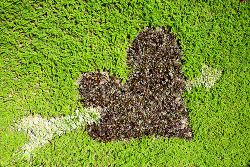 heart pierced with arrow - turf, arrow, grass, green, heart, la paz, lawn, love, pierced, symbol, turf