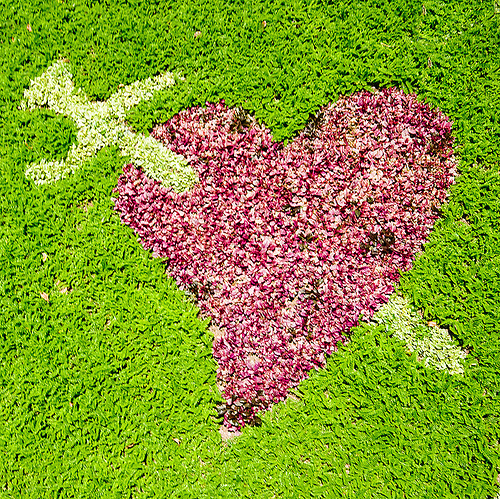 heart pierced with sword - turf, grass, green, heart, la paz, lawn, love, pierced, sword, symbol, turf
