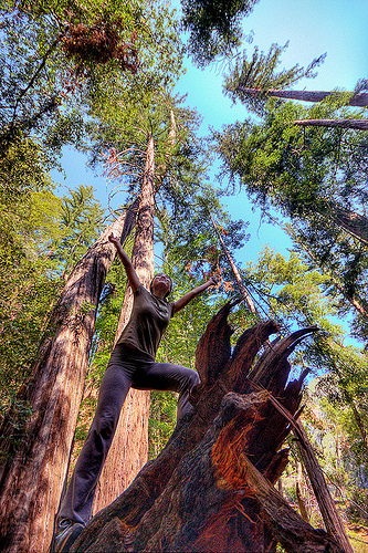 hiker on tree stump - redwood forest (vantana wilderness), big sur, fallen tree, forest, hiking, pine ridge trail, redwood tree, sequoia sempervirens, standing, tree trunk, trekking, vantana wilderness, woman