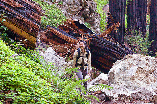 hiker passes a fallen redwood tree (vantana wilderness), backpack, backpacking, big sur, fallen tree, forest, hiking, pine ridge trail, redwood tree, sequoia sempervirens, tree log, tree trunk, trekking, vantana wilderness, woman