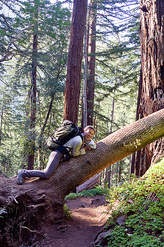 hiker resting on fallen tree (vantana wilderness), backpack, backpacking, big sur, fallen tree, forest, hiking, lying down, pine ridge trail, resting, tree trunk, trekking, vantana wilderness, woman