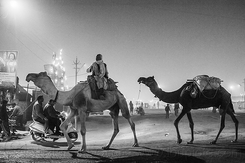 hindu man riding camel at night - kumbh mela 2013 (india), backlight, double hump camels, hindu pilgrimage, hinduism, in tow, india, maha kumbh mela, man, night, pilgrim, riding, towing, walking