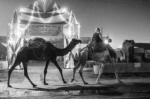 hindu pilgrim riding camel in front of ashram gate - kumbh mela 2013 (india), ashram, backlight, double hump camels, gate, hindu pilgrimage, hinduism, in tow, india, maha kumbh mela, man, night, pilgrim, riding, towing, walking