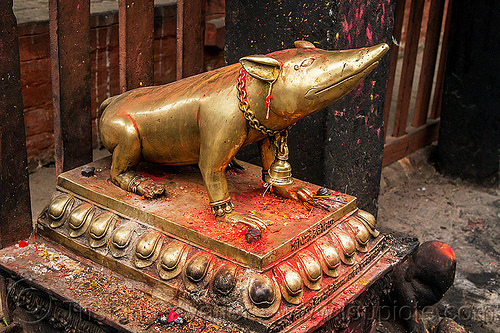 holy rat statue in hindu temple - kathmandu (nepal), bell, brass, chain, ganesha, hinduism, kathmandu, mouse, offerings, rat, religion, shrew, statue, vahana