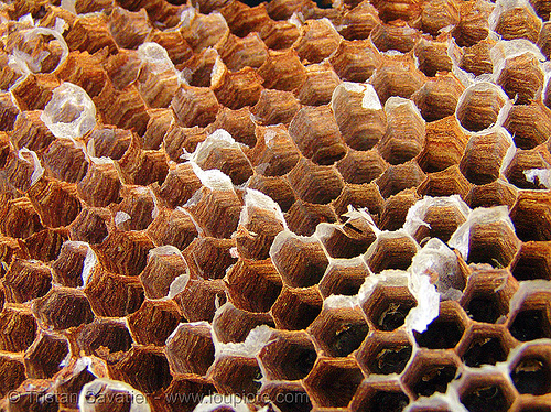 honeycomb - beehive, beehive, cao bang, cao bằng, hexagons, honeycomb, insects, market, phobia, trypophobia, wasps