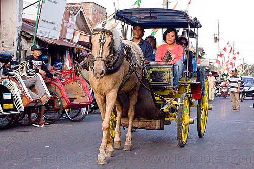 horse carriage in jogja street, draft horse, draught horse, horse carriage, indonesia, jogja, yogyakarta