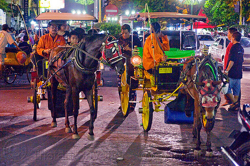 horse carriages at night on malioboro - jogja (indonesia), draft horse, draught horse, horse carriages, horses, indonesia, jogja, malioboro, night, yogyakarta
