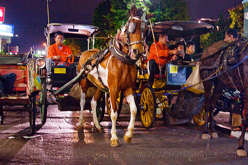 horse carriages at night on malioboro - yogyakarta (indonesia), draft horse, draught horse, horse carriages, horses, java, jogja, jogjakarta, malioboro, night, street, yogyakarta