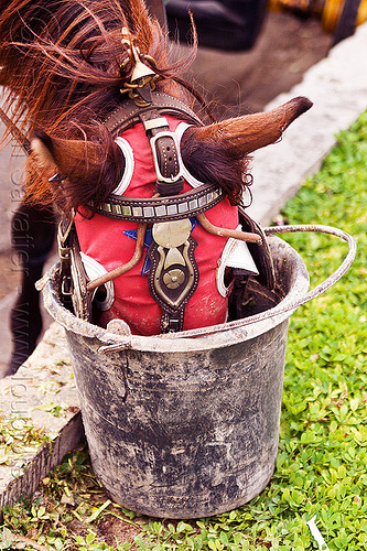 horse feeding from bucket, bucket, draft horse, draught horse, eating, indonesia, jogja, yogyakarta