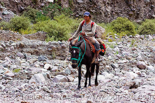 horse riding (argentina), bridle, horse-riding, horseback riding, iruya, man, noroeste argentino, people, pony, quebrada de humahuaca, riverbed, rocks, san isidro, trail