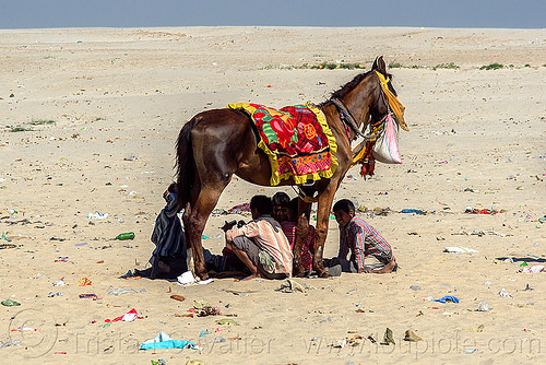 horse shade - varanasi (india), feed bag, garbage, horse, india, river bank, saddle, sand, shade, sitting, squatting, trash, varanasi