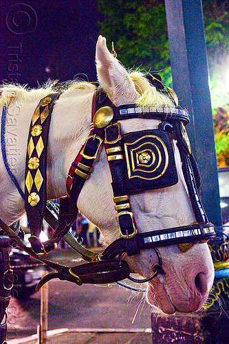 horse blinders, bridle, draft horse, draught horse, java, jogja, jogjakarta, malioboro, night, people, street, white horse, yogyakarta