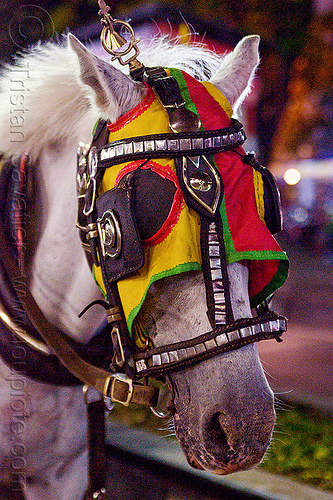 horse with bridle mask and blinders, bridle, draft horse, draught horse, horse hood, horse mask, indonesia, jogja, malioboro, night, white horse, yogyakarta