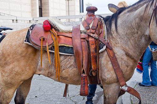 horse with mexican saddle, horse riding, horseback riding, leather